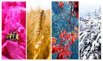Négy évszak: tavasz, nyár, ősz és tél photo