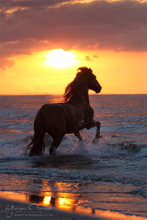 #HORSES   SUNSET ON THE WATER