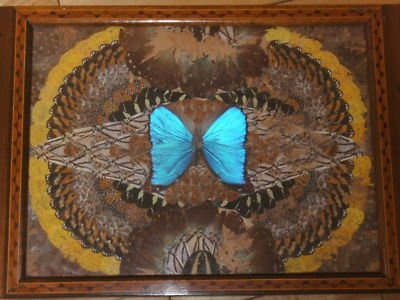 Victorian serving tray with butterfly wings under glass----just found one of these in my attic Sunday!!!