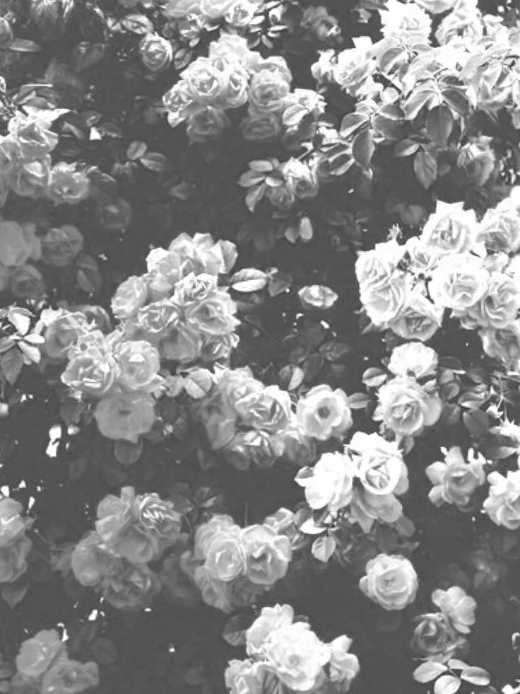71 best wallpaper images on pinterest backgrounds background black and white flower wallpaper mightylinksfo Image collections