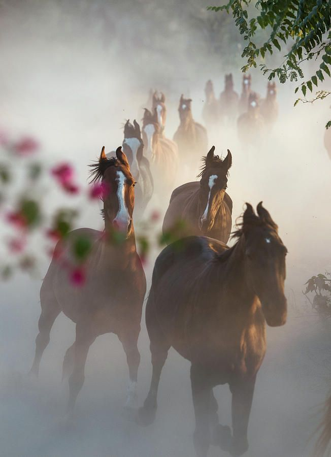 Horse Herd Coming Home by Ekaterina Druz