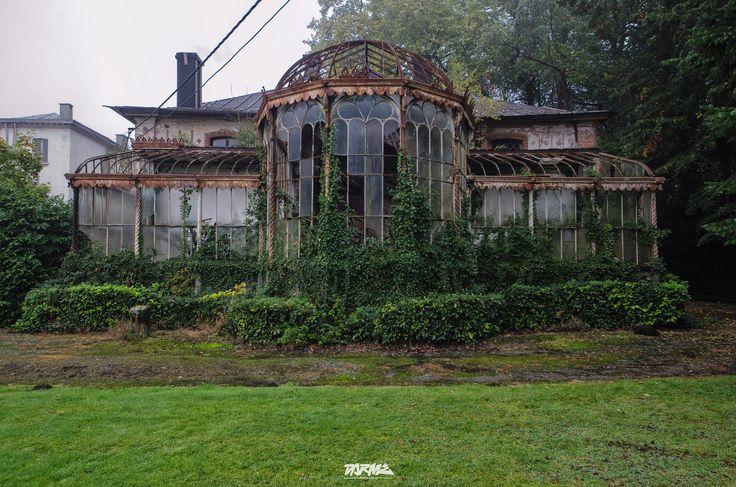 An overgrown greenhouse