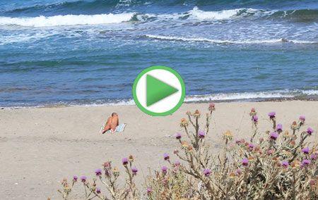 Guía de Playas de Vera