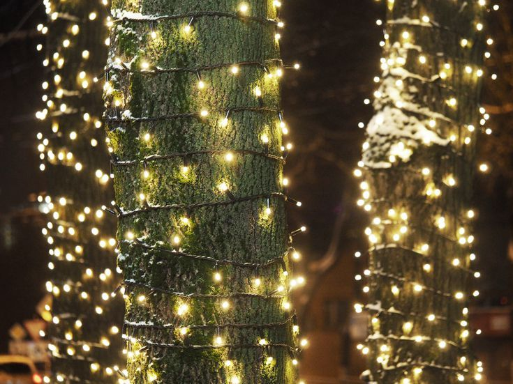 The Best Way To Wrap Trees With Outdoor, How Many Feet Of Light Do You Need To Wrap An Outdoor Tree
