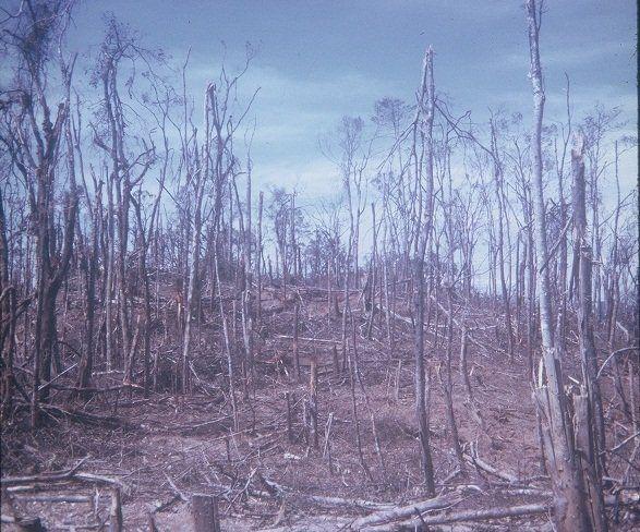 Aftermath of the Battle of Hamburger Hill, Vietnam War. Sheer devastation .  #VietnamMemories