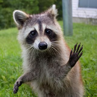 """""""Hi there!"""" 