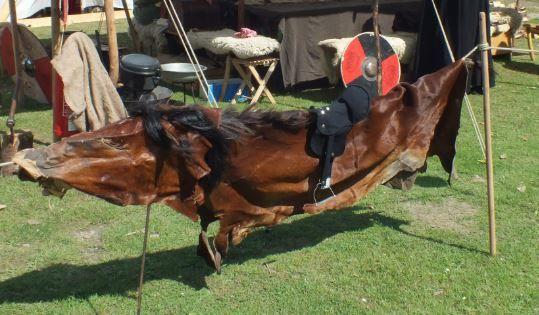 trockenes Pferd - Foto: S. Hopp