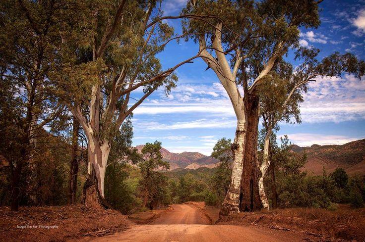 Flinders Ranges. Jacqui Barker Photography
