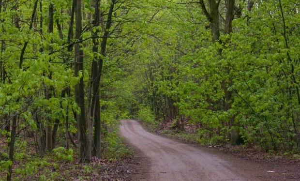 Maasduinen  Wandeltocht Belfeld 3km