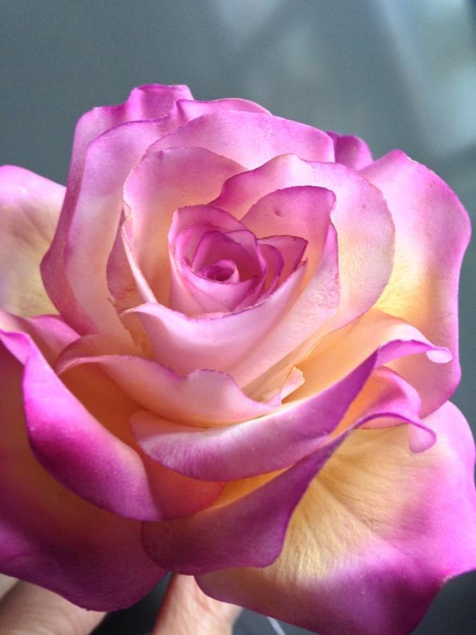 Rose by Piro Maria Cristina