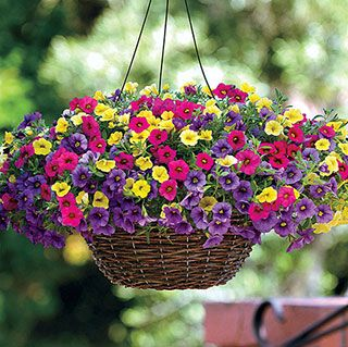 Ideal for baskets, window boxes, and planters!