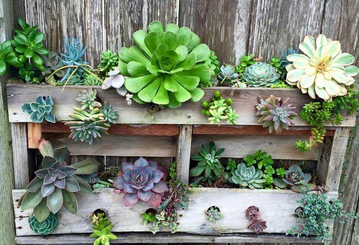 Shelve idea of succulent