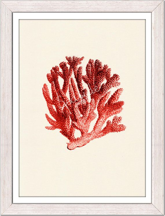 Antique+sealife+Illustration+Red+coral+no06++sea+by+seasideprints,+$12.00