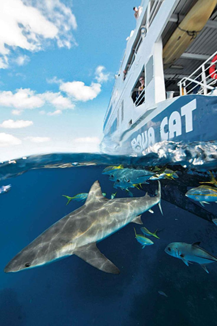 12 best caribbean scuba diving destinations dive sites images on diving with sharks in bahamas eleuthera and exuma cays by liveaboard scuba diving magazine xflitez Images