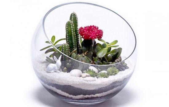 9 steps to make a terrarium using succulents & cacti. Cactus in half moon bowl