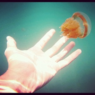 ever afraid to touch a jellyfish? of course. but please touch this kind of jellyfish, it's stingless :) where? in Kakaban Lake, Derawan Islands, East Kalimantan, INDONESIA