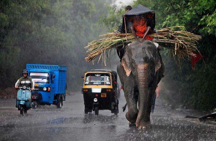 eLEPHANT rIDE IN kERALA   Kerala Tourism Packages ...