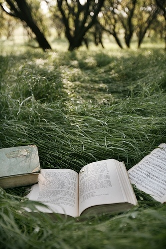 Reading outside...sun, grass, trees, gentle breeze.  Yes.