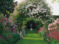 Discover why the rose is a classic garden staple with this gardening guide from HGTV Gardens.
