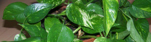 Deze drie planten zuiveren de lucht in je huis het best - Niburu.nl
