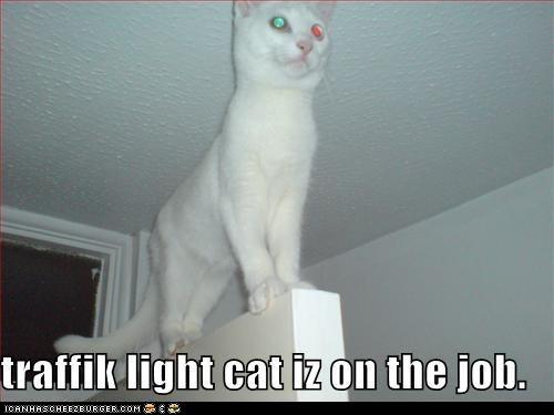 traffik light: Funny Shtuff, Cat Rules, Lights Cat, Cat Aren T, Funny Stuff, Categori Oth, Cat Iz, Animal Funny, Funny Memes