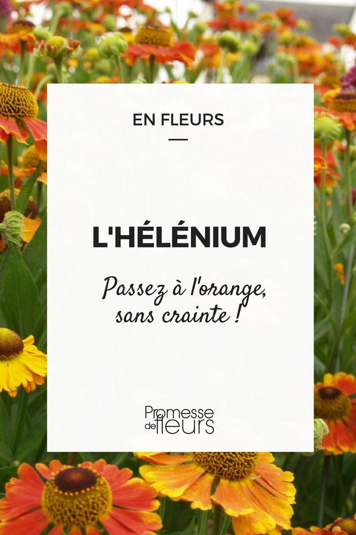 #helenium #helenie #vivace #orange