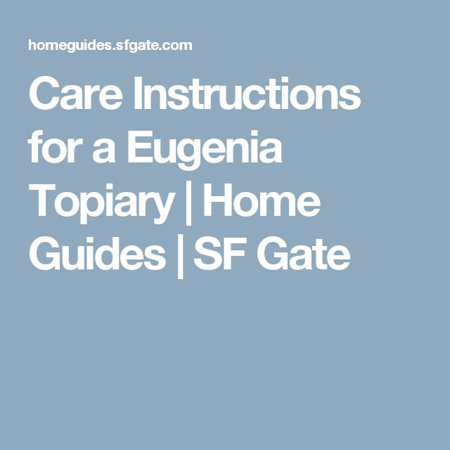 Care Instructions for a Eugenia Topiary | Home Guides | SF Gate