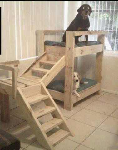 Johnathon thought I was crazy for thinking of pet bunk beds