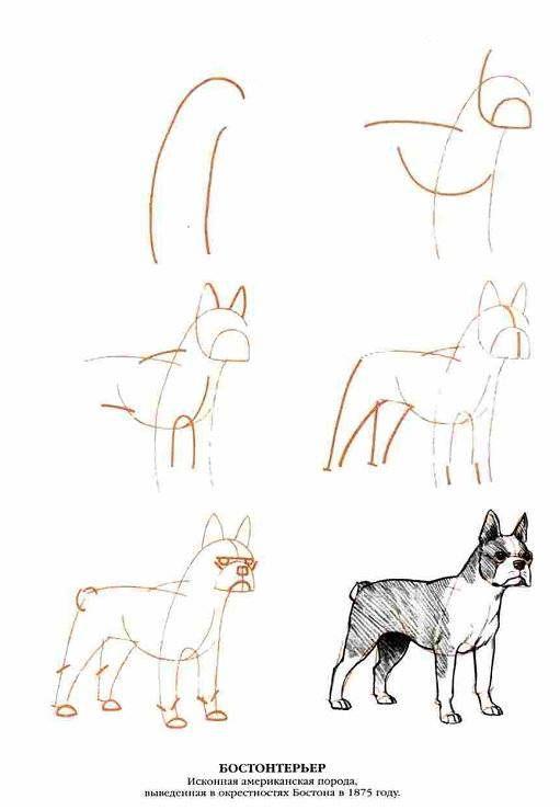 Иллюстрация 7 из 13 для Рисуем 50 собак - Ли Эймис | Лабиринт - книги. Источник: Спанч Боб