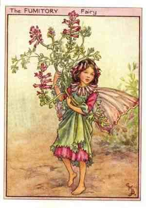 The FUMITORY Fairy ~ Cicely Mary Barker ~