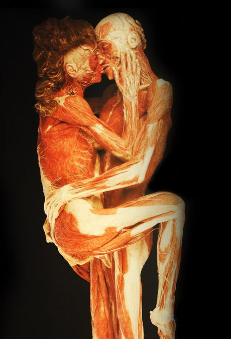 "mvvk: "" dentelle-noir: "" Anatomist and Artist Gunther Von Hagens uses plastination to perfectly preserve human cadavers. "" """