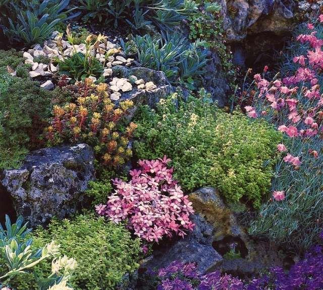 steingarten bepflanzen ideen bodendecker farbe spiel