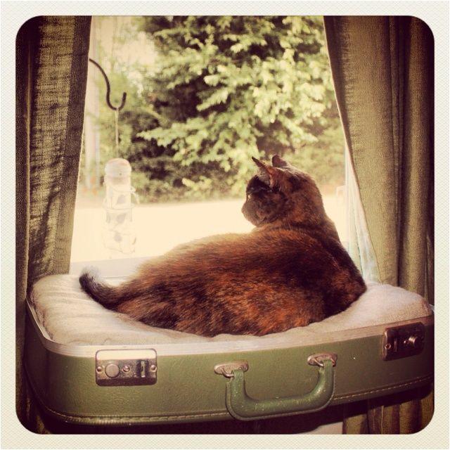 repurpose for cat perches ninau0027s upcycled suitcase window perch repurposed