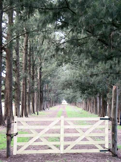 Drivw way and gate.