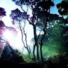 Kamis, 30 Juli 2015, tanggal kapan saya Summit Mt. Singgalang 2877 mdpl untuk yang ke enam kalinya. Setiap perjalanan harus punya tujuan. Pencapaian yang saya targetkan waktu itu adalah untuk mendapatkan sunrise di cadas sebelum Telaga Dewi yang spotnya sangat strategis menghadap mata angin timur. Sebelumnya sudah lima kali naik ke Singgalang belum satu pun …