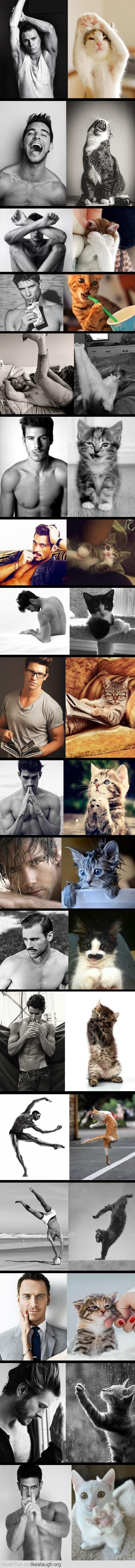 Models vs Cats TAKE 2. Cats win every time   LOVE THIS