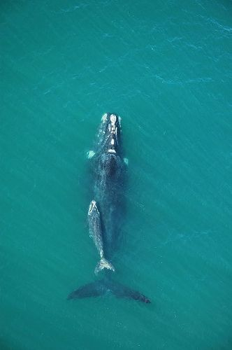 Whales of 2007 in Santa Catarina