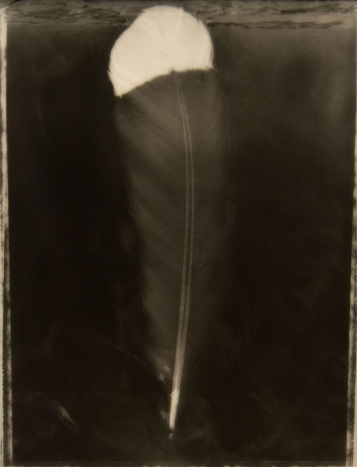 Fiona Pardington  Wiriwiri, Tremble
