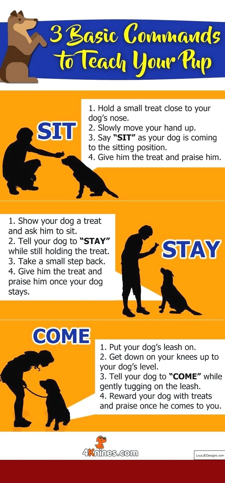 How To Train Your Dog Not To Bark In The Kennel And Pics Of Potty