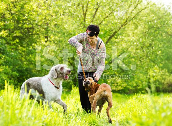 young beautiful woman playing with dogs royalty-free stock photo