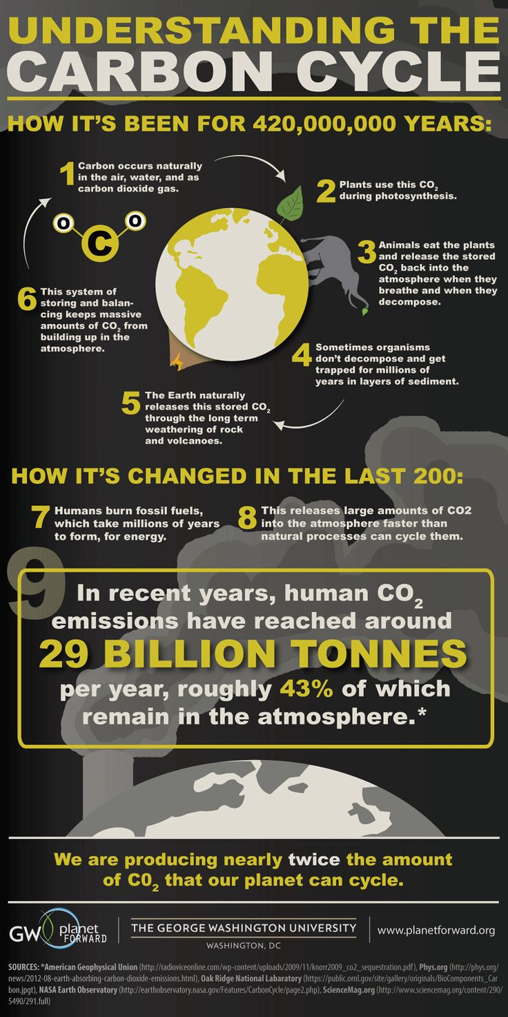 best images about carbon infographics carbon understanding the carbon cycle planet forward