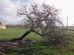 boom omtrekken