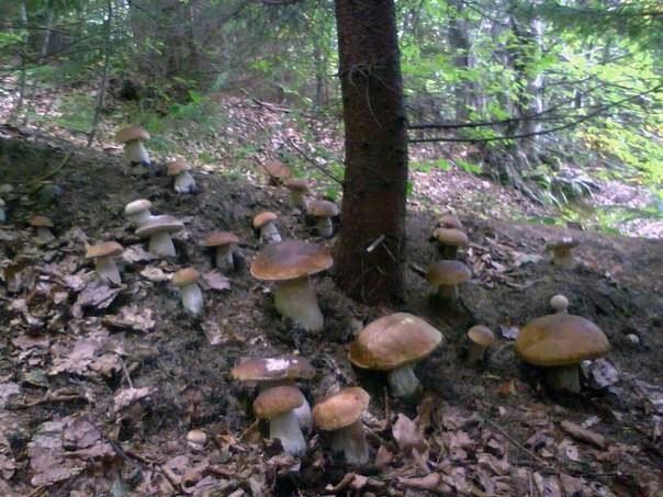 Как сеять грибы (8 фото)