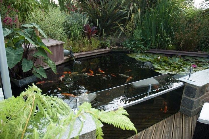 17 best images about bassin carpe koi on pinterest koi for sale garden waterfall and farms. Black Bedroom Furniture Sets. Home Design Ideas