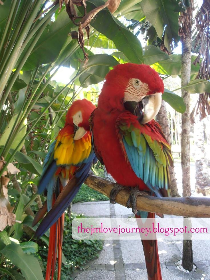 couple at Bali Bird Park, Batu Bulan, Indonesia ♥