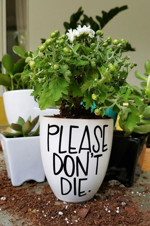 Please Don't Die Planter Hand Lettered Planter Funny | Etsy