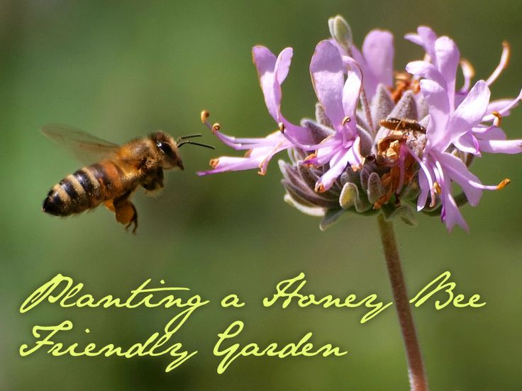 Lovely Greens Planting A Honey Bee Friendly Garden