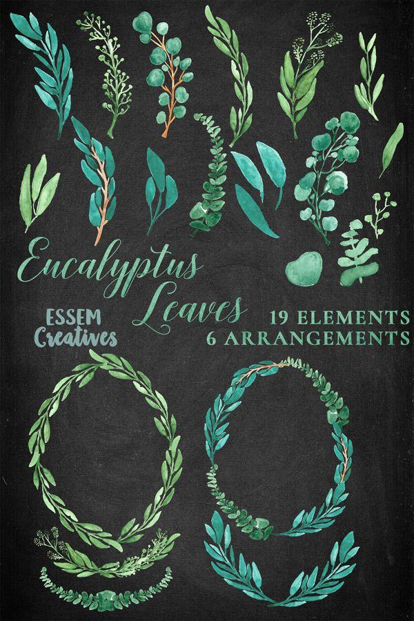 BUNDLE Watercolor Eucalyptus Leaves  by Essem Creatives on @creativemarket