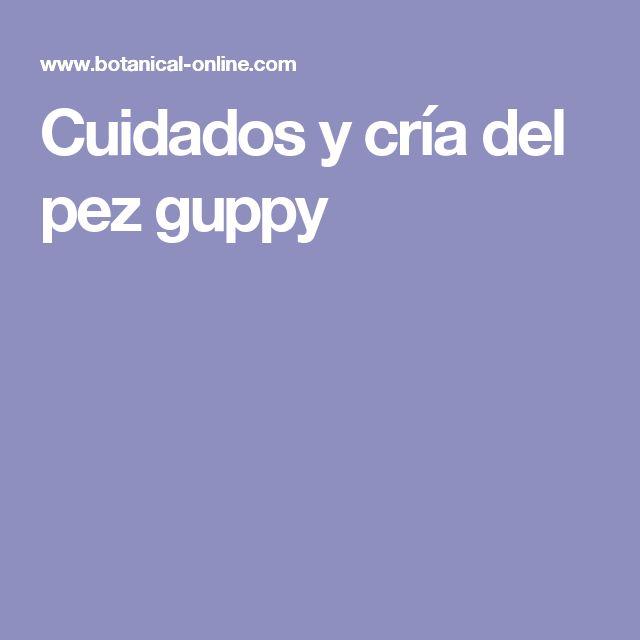 Cuidados y cría del pez guppy