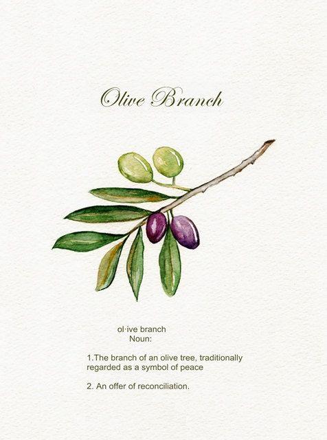 Rama de olivo / aceitunas / verde / púrpura / hojas / sucursal